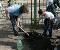 Прикрепленное изображение: рабочий момент посадки деревьев 4.jpg
