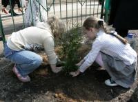 Прикрепленное изображение: рабочий момент посадки деревьев 3.jpg