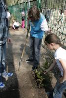 Прикрепленное изображение: рабочий момент посадки деревьев 5.jpg