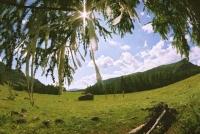 Солнце светит и растет трава